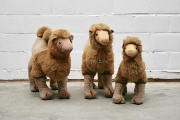 Kamelen familie